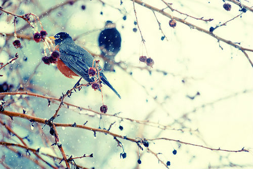 beautiful-bird-birdie-birds-Favim.com-632933