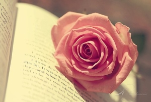 beautiful-blossom-book-cute-flower-flower-on-book-Favim.com-40710